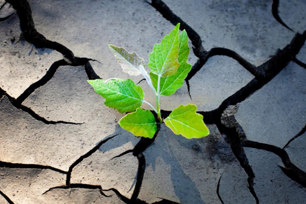 Enterprise Resilience